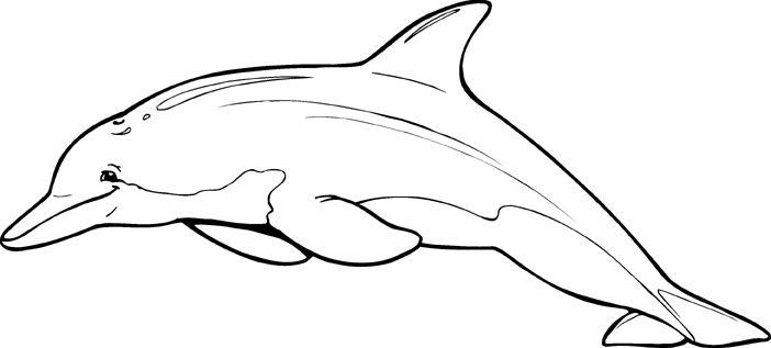 Dolphin Outline Clip Art | Clip Art Gallery | dolphin ...