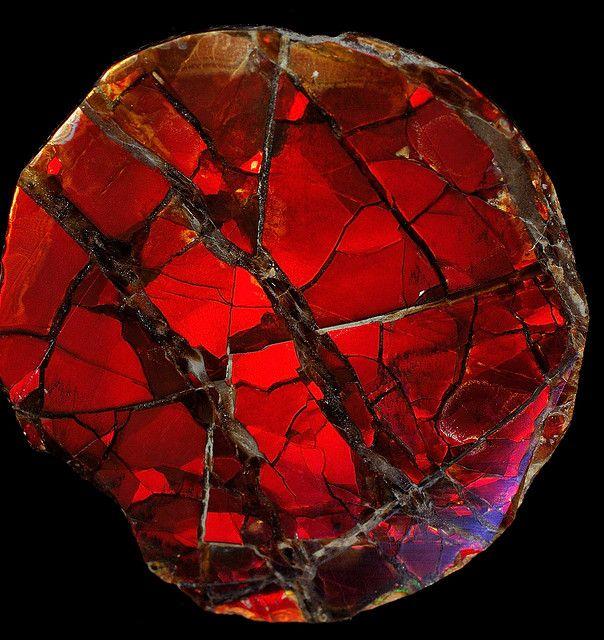 Ammonite shell    Ammonite shell under cross polarized light By Captain Tenneal