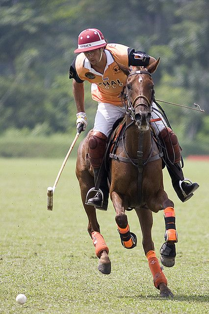 82 Best Polo Ll Images On Pinterest Horses Ice Pops And