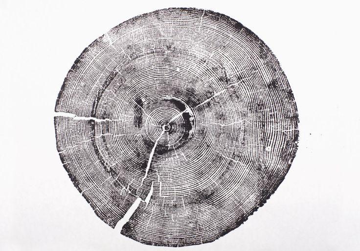 Rock Canyon Pine. Original Print. Old growth pine wood print (30.00 USD) by LintonArt
