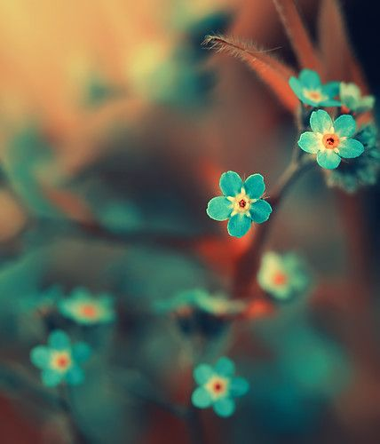 Japanese blossoms - blue and red - color - beautiful