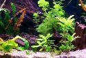 Freshwater Aquarium Setup and Maintenance