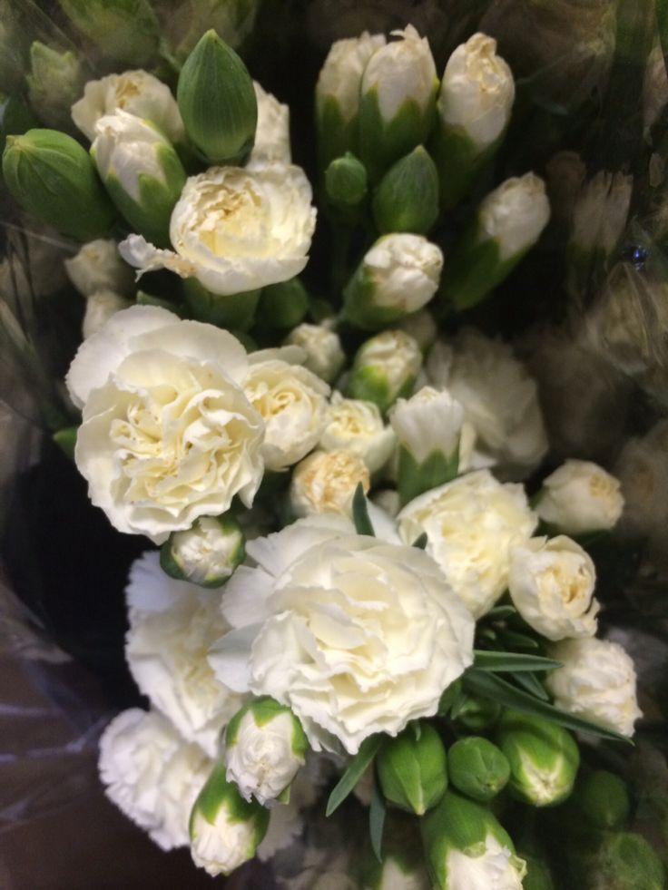 White mini carnations