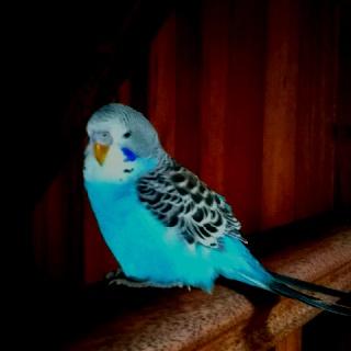 My buddy, Poppet :)