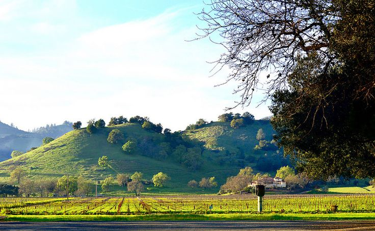 What Makes New Zealand Red Wine So Good?    http://flightsglobal.net/what-makes-new-zealand-red-wine-so-good/   #CheapFlights #Good, #Makes, #Wine, #Zealand #Napa_County