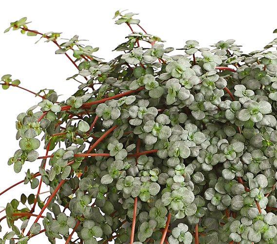 41 besten Dehner Gartencenter Bilder auf Pinterest   Gartencenter ...