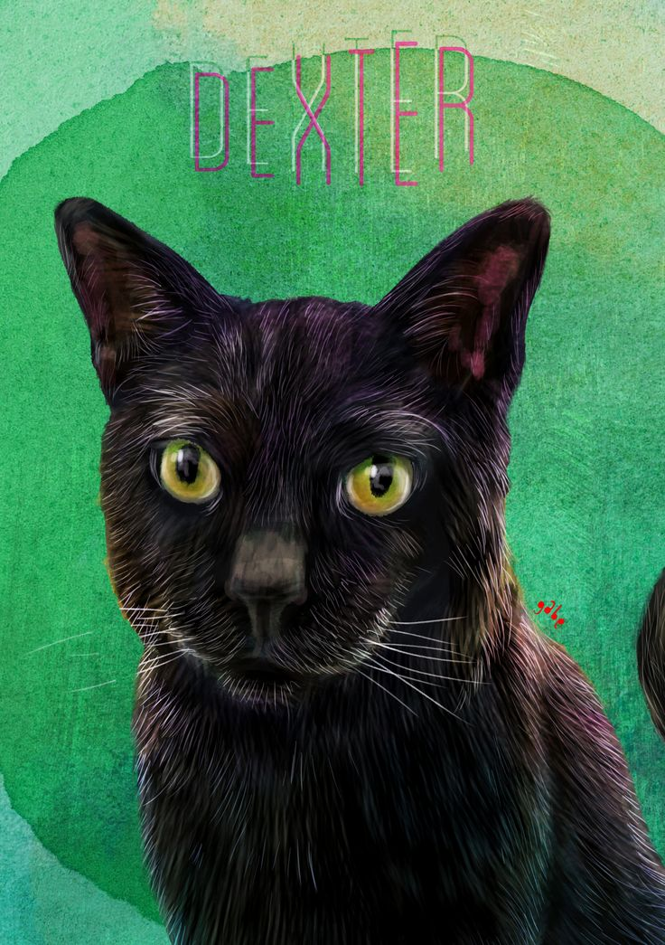 Dexter in solo mode  Commission info & requests: https://www.etsy.com/au/listing/191989009/custom-pet-portrait-beautiful-digital?ref=shop_home_active_2