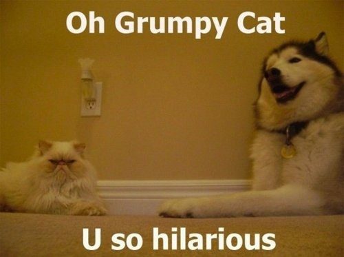 I saw this about 4 times before I decided to pin it... grumpy cat effin' got me. Damn it.