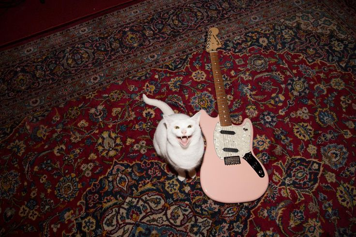 Shout-out to our furry friends on #NationalCatDay!  #FenderOffsets   #fender #cat #Cats #kitten #guitar #guitars #music #musician
