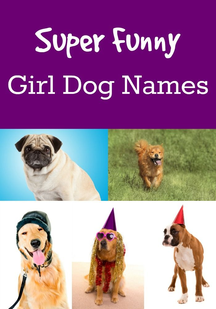Cute and funny girl dog names -- check 'em out!