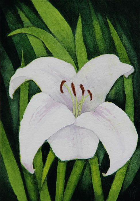 White lily watercolour. I have this available for prints and merch on my society6 and FAA pages. Sorry, original is sold. Visit petruk.net for details