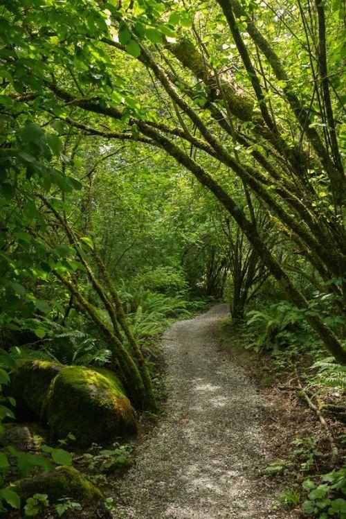 """  Whatcom Falls Park, Bellingham, Washington    """