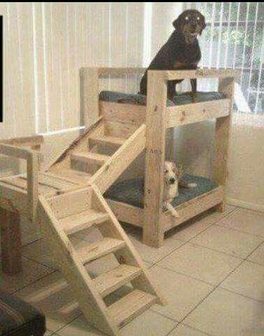 Futuro hogar para perros