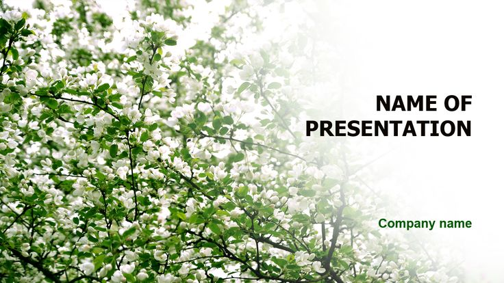 Wonderful Flowering PowerPoint theme. This beautiful and creative PowerPoint theme is universal and fit for various presentations on flowering time, spring, plants, good weather, blooming.