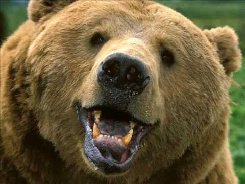 Csörömpölők Együttes: Medve-nóta