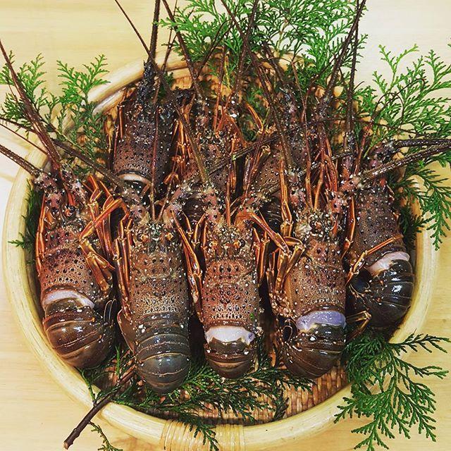 【kozue_ty】さんのInstagramをピンしています。 《実家から届きました♪ だいたい週1くらいで何かが届く☆ 宅急便のお兄さんも「また、鹿児島からですね~」って! お味噌汁、お刺身、パスタ、ガーリックマヨチーズ焼きなどで食べまーす😋 #伊勢海老#鹿児島#長島#新鮮#実家#海#spinylobster#kagoshima #nagashima #instagood #instafood #いつもありがとう #近所 の人にも#おすそわけ #おいしすぎ #海なし県》