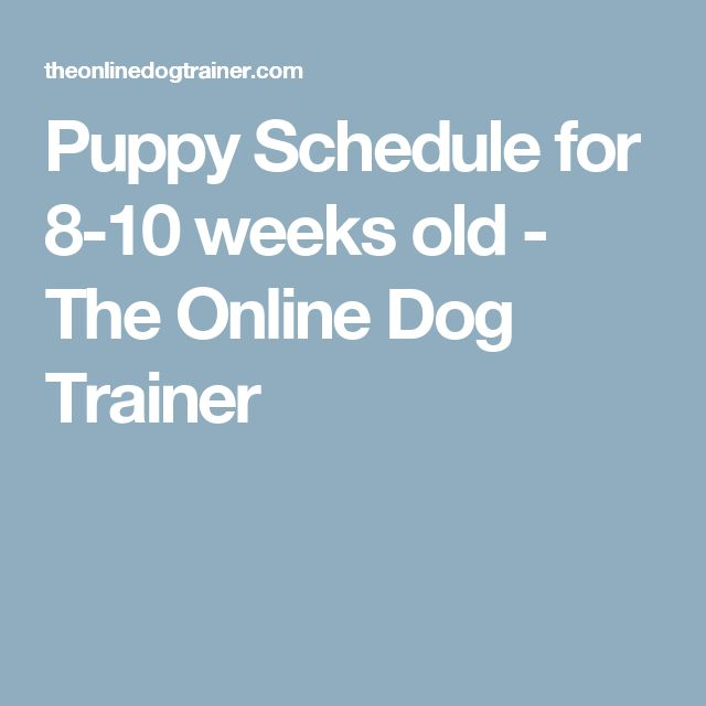 Puppy Schedule for 8-10 weeks old - The Online Dog Trainer