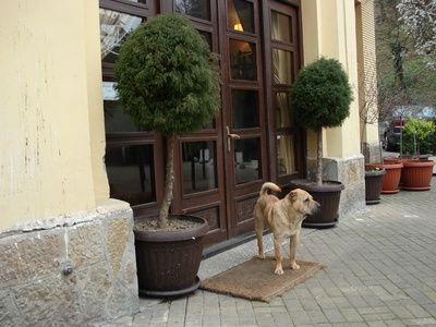 Dog-Friendly Restaurants in New York City