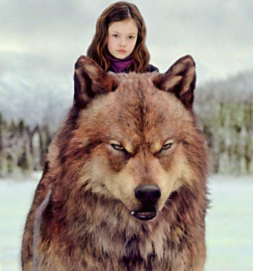 Jacob's ready to rush Renesmee from the battle scene in The Twilight Saga - Breaking Dawn Part 2.