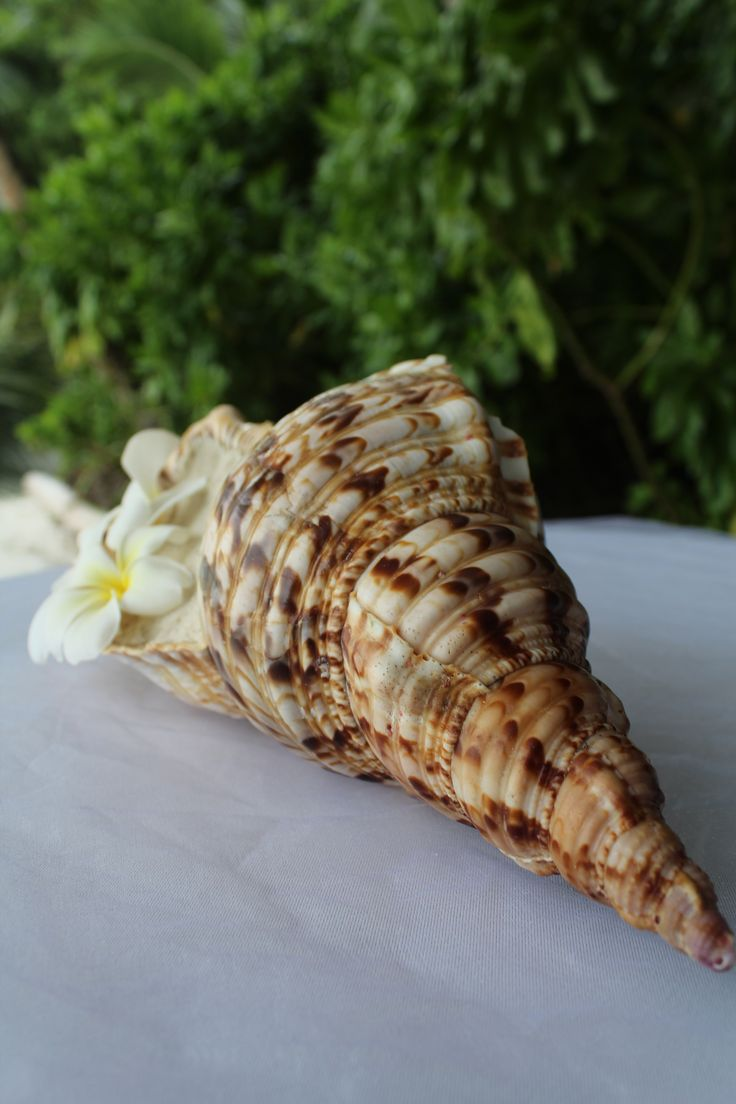 Looking for a creative way to unveil the ring? How about setting it in sand, inside a beautiful shell from Seychelles?