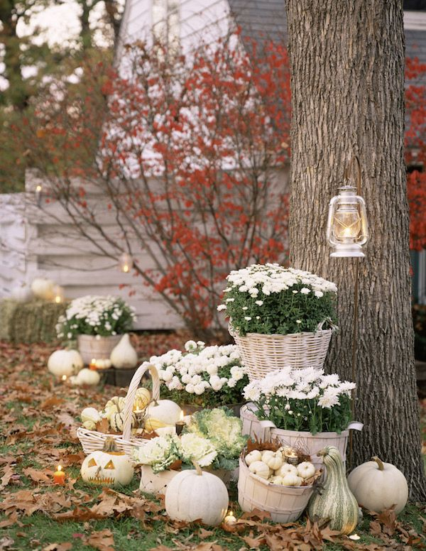 White Fall Flowers and White Pumpkins - Need this in pink and gray for the wedding church steps
