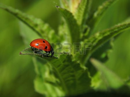 Ladybug on the leaf of a plant close up