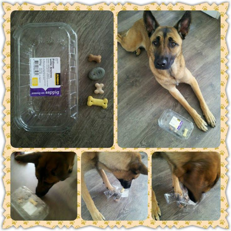 Home Made Wood Dog Treat Puzzles