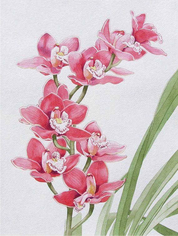 1000 fleurs d 39 orchid es sur pinterest orchid es soin pour les orchid es et jardinage - Arrosage orchidee d interieur ...
