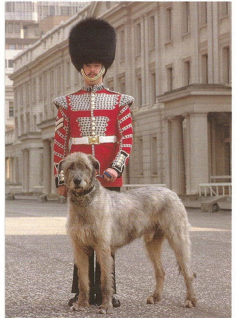 Irish Guards Drummer with their Mascot | Flickr - Photo Sharing!