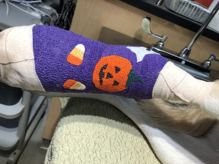 Pin by Dini McGregor on Vet wrap bandages Vets, Wrap