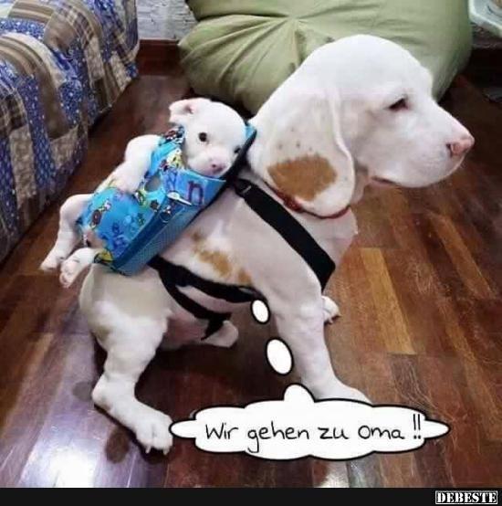 Wir Gehen Zu Oma Lustige Bilder Spr 252 Che Witze Echt Lustig Babytiere