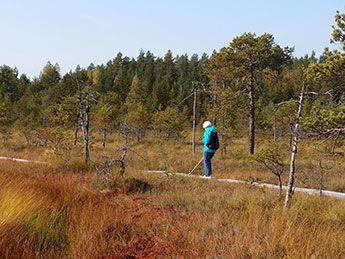 Suot hurmasivat retkeilijät  #Koulu  #Luonto  #Suomiretki