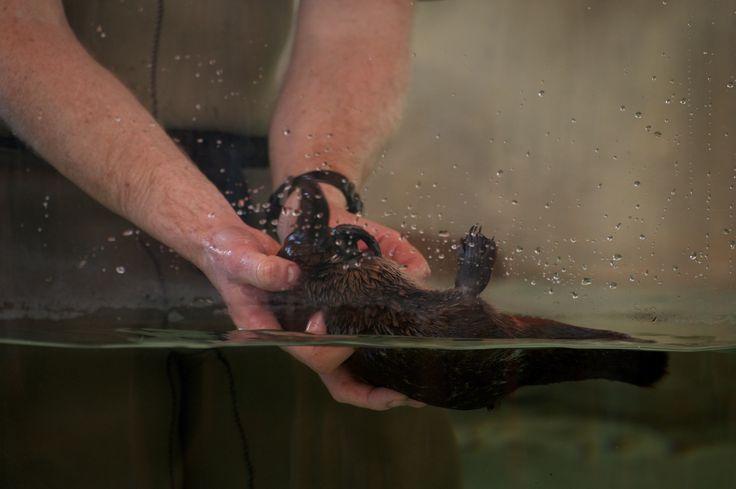 17 Best images about Healesville Sanctuary on Pinterest ...