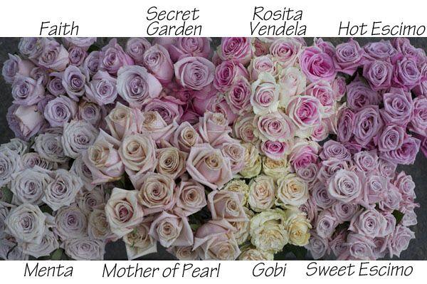 The Blush Rose Study includes Faith, Secret Garden, Rosita Vendela, Hot Escimo, Menta, Mother of Pearl, Gobi & Sweet Escimo. All Roses provided by Harvest Wholesale. http://www.harvestwholesale.com
