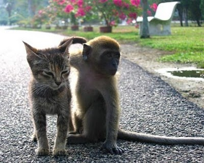 Unusual 2 Tasty: Funny Odd Couples: Cats and Their Weirdo Friends