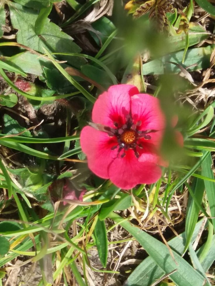 Small flower on barren mountain top up lifts your spirts