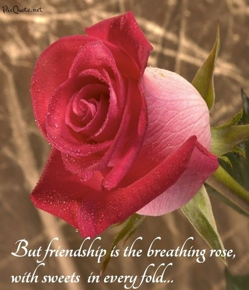 But friendship is the breathing rose with sweets in every fold