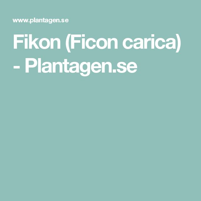 Fikon (Ficon carica) - Plantagen.se
