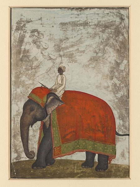 An elephant with a red saddle-cloth and a mahout