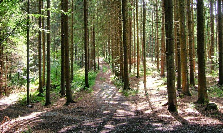 Kaikenried - Bayerischer Wald