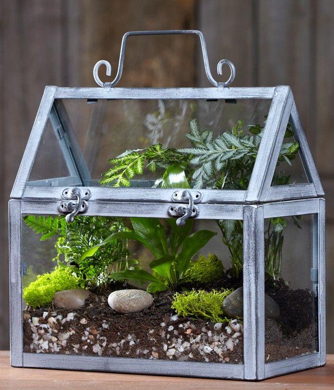 Les 88 meilleures images du tableau terrariums sur pinterest jardin int rieur jardins - Kit terrarium plante ...