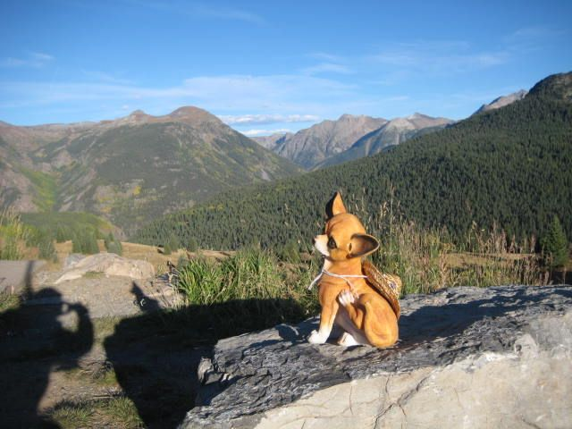 The Chihuahua in the mountains