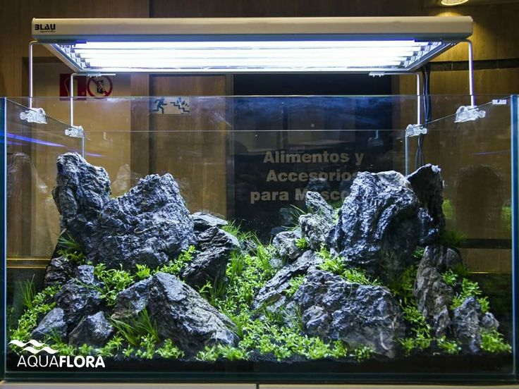 Layout By Balbi Vaquero And Filipe Oliveira At FishCorner In Madrid Powered  By Aquaflora Plants.