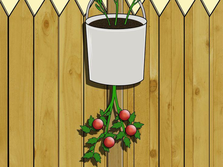 DIY topsy turvy tomato or strawberry planter