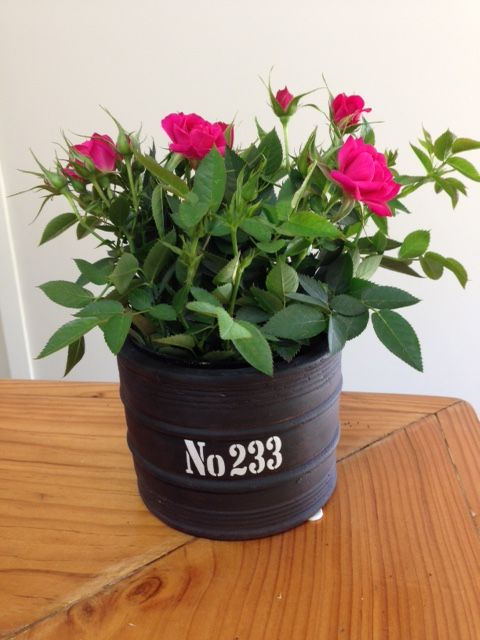"""Barrel of Flowers"" *new range* part of Summerhill's new contemporary range! thick ceramic in matte black or rusty iron red filled with your choice of flowering roses, fuchsias, cyclamen, exacum or lush green foliage ferns! http://www.summerhillnurseries.com.au/www/content/default.aspx?cid=1807&fid=670"