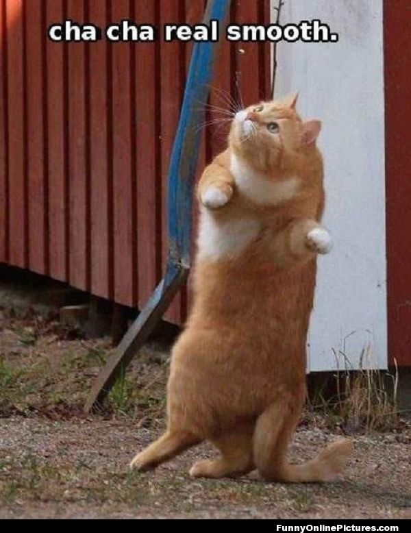 cha cha real smooth.. #funny #cat #meme @ www.FunnyOnlinePictures.com