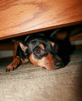 Signs and Symptoms of Fear in Dogs