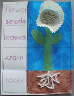 Instructions and printable for this flower, garden or spring theme craft. Craft and print worksheet in one covering the parts of a plant.