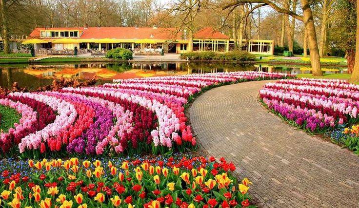 Parcul Keukenhof (Olanda), cel mai impresionant paradis floral din întreaga lume