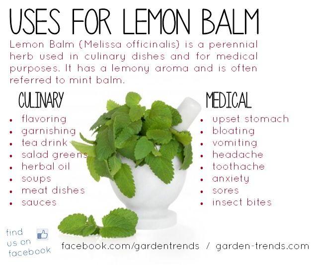 Use Lemon Balm  Homespun Seasonal Living